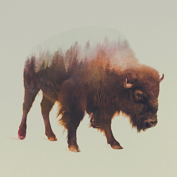 double-exposure-animal-portraits-andreas-lie-10