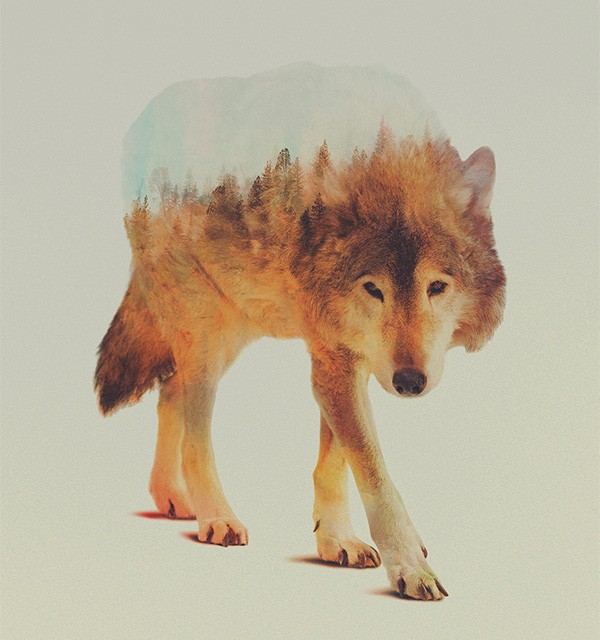 double-exposure-animal-portraits-andreas-lie-2