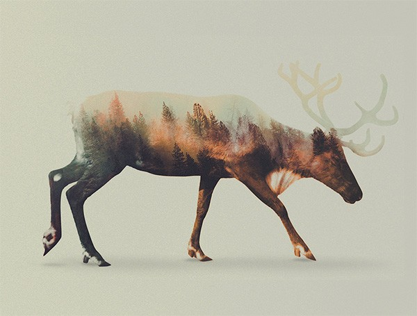 double-exposure-animal-portraits-andreas-lie-4