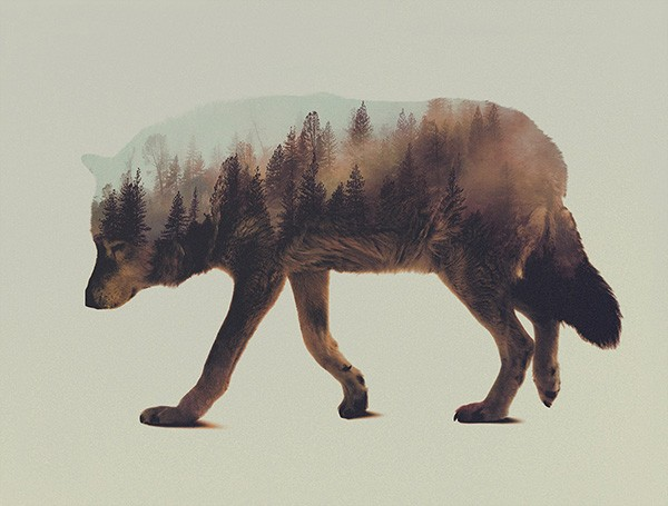 double-exposure-animal-portraits-andreas-lie-6