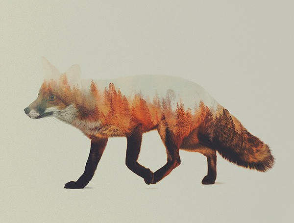 double-exposure-animal-portraits-andreas-lie-7