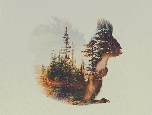 double-exposure-animal-portraits-andreas-lie-8